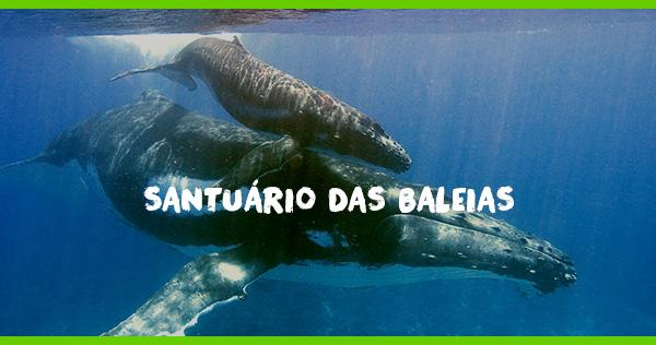 Santuário das Baleias